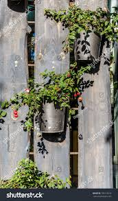 Flower Pots On Wooden Fence Flower Stock Photo Edit Now 795112618