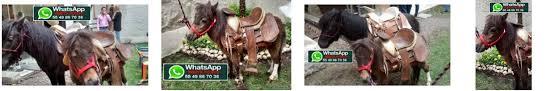 renta pony cdmx – Lienzo Charro de Constituyentes