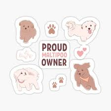 Maltipoo Stickers Redbubble