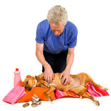 home remes for dogs dog care