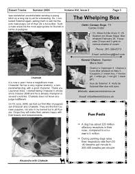 Canaan Dogs. The kennel RKF - FCI