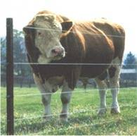 Build A High Tension Fence Diy Mother Earth News