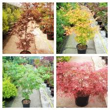 acers the mill garden centre