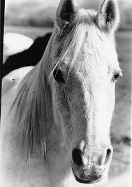 Amy The Boy Horse | Horses, Horse photography, Equine photography