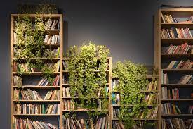 750 Bookshelf Pictures Hd Download Free Images On Unsplash