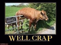 Cow Stuck On A Fence Funny Pictures Funny Animals Funny Pictures Bones Funny