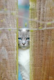 Can You Fence A Cat Star Tribune