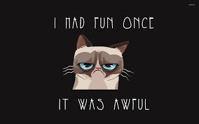 37 grumpy cat meme wallpaper on