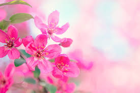 spring beautiful flowers hd picture 02