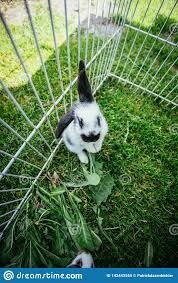 Cute Little Bunny In An Outdoor Compound Green Grass Stock Image Image Of Breeder Fence 142443555