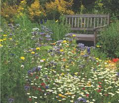 wildflower meadows griffins garden centre