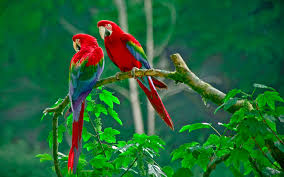 اجمل الطيور بالصور رمزيات وخلفيات صور طيور ميكساتك