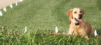 Misconceptions About Shock Collars For Dogs