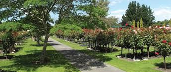 harewood memorial gardens crematorium