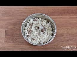 homemade dog food for struvite bladder