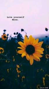 ورد صور ازهار طبيعي ورود بالوان جميله صور ورد موجه بحر