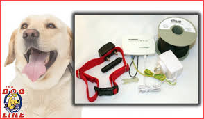 Electric Dog Fence How Do Invisible Dog Boundary Collars Work