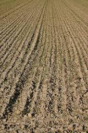 Image result for agricultural plot