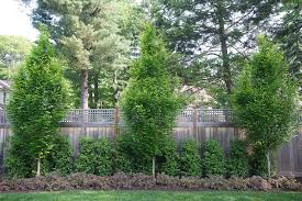 Narrow Fence Planting Hornbeams Weigla Florida Midnight Wine And Upright Narrow Bo Landscaping Along Fence Garden Ideas Along Fence Line Fence Landscaping