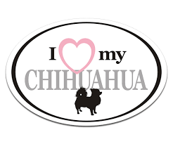 Long Haired Chihuahua I Love My Dog Oval Decal Euro Vinyl Car Window Sticker Rotten Remains High Quality Stickers Decals