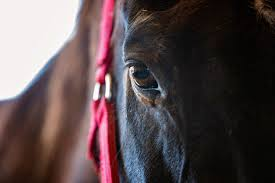 Where The Horses Heal The Soul: Twila LaBar's Upcoming Documentary