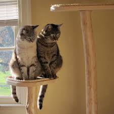5 earth friendly cat scratching post