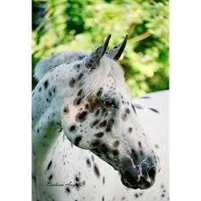 appaloosa horse garden flag furrypartners