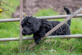 Invisible Dog Fence Can Pets Out Run Them Dogfence