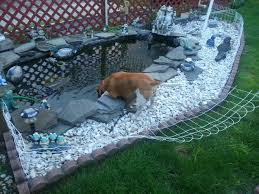 My Dad Put Up A Fence Around His Pond To Keep Turtles In His Beagle Wasn T A Big Fan Aww