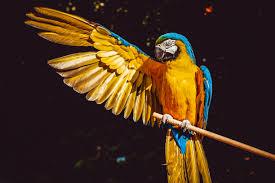 wallpaper macaw parrot bird hd 4k