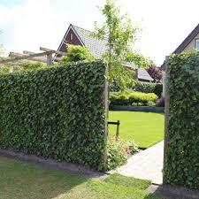 Mobilane Green Screen An Instant Green Hedge Panel Mobilane
