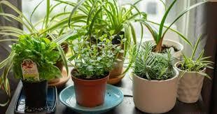 indoor herb garden planters to grow
