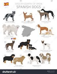 Country Origin Spanish Dog Stock Vector ...