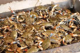 Washington D.C. Part 2: The fish market ...