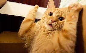 صور قطط مضحكة 2018 صور مضحكة نكت فيس بوك واتس اب انستقرام Funny Images