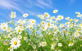 Fond d'écran : lumière du soleil, herbe, ciel, champ, vert, été ...