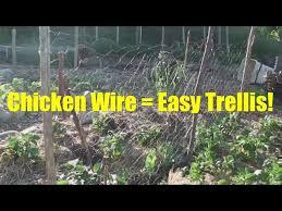 Trellis Basics Part 3 Easy Chicken Wire Trellis Youtube