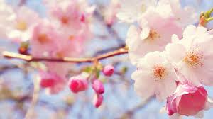 أروع صور زهور 2020 Hd أجمل صور خلفيات ورمزيات رومانسية للأزهار