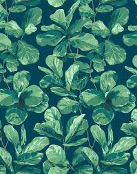fiddle fig wallpaper by nathan turner