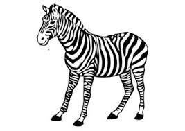Kleurplaat Zebra Kleurplaten Zebra S Gratis Kleurplaten