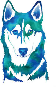 siberian husky watercolor