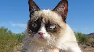grumpy cat hd wallpaper wallpaperfx