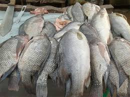 Trade standards translated into Luganda to boost fish sector