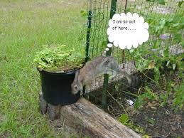 Deer Proof Garden Fencing Ideas Apartments