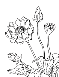 flowers drawing drawing by irina