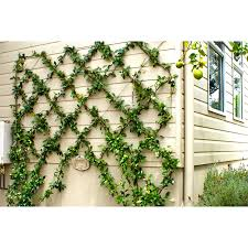 Whites 5m Grip And Grow Trellis Kit Plant Trainer Bunnings Warehouse