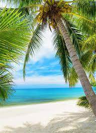 جميلة مشهد الشاطئ تحت عنوان خلفية التصوير شجرة النخيل سحابة السماء