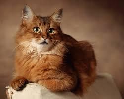 lovely cat hd by claudiu d desktop