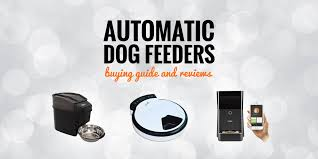 5 best automatic dog feeders 2020