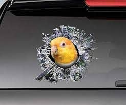 Amazon Com Rusty Caique Window Sticker Car Sticker Parrot Car Decal Vinyl Sticker For Cars Windows Walls Fridge Toilet And More 11 Inch Kitchen Dining